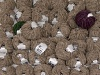 Mixed Lot Chenille Light